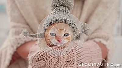 Un gatito de punto preparado para el invierno, con sombrero de lana de punto almacen de metraje de vídeo