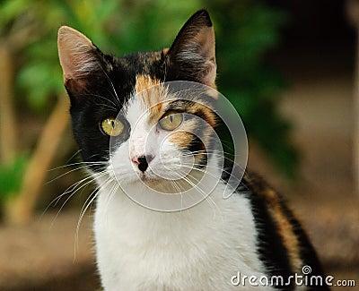 Un gatto di 3 colori immagini stock immagine 12153994 - Immagine del gatto a colori ...