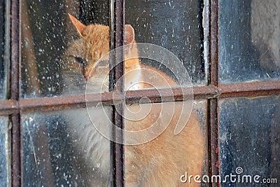 Un Gatto Gingery Dietro Una Vecchia Finestra Fotografia