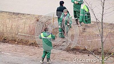 Un gruppo dei lavoratori ha piantato gli arbusti nel posto in cui i pedoni hanno calpestato il prato inglese archivi video