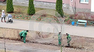 Un gruppo dei lavoratori ha piantato gli arbusti nel posto in cui i pedoni hanno calpestato il prato inglese video d archivio
