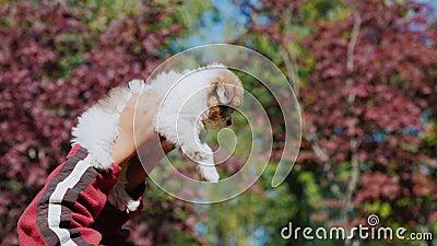 Un hombre está jugando con un perrito Las mentiras y lo guardan sobre él, sólo las manos con el animal doméstico son visibles en  almacen de video