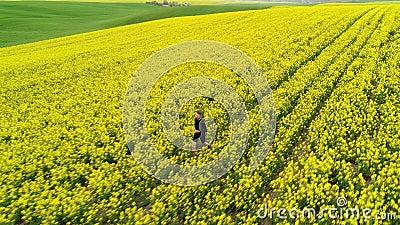 Un homme court sportivement sur un champ de colza de printemps jaune clips vidéos