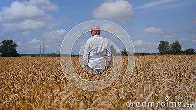 Un homme reste et touche une oreille de blé dans le champ de blé sur fond de ciel nuageux. Concept : écologie, air pur, été clips vidéos