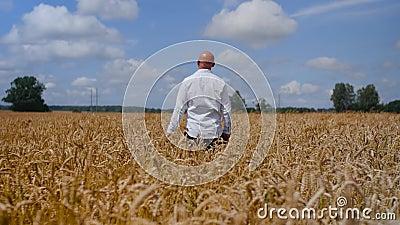 Un homme reste et touche une oreille de blé dans le champ de blé sur fond de ciel nuageux. Concept : écologie, air pur, été banque de vidéos