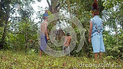 Un indigeno ha tirato giù una liana di ayahuasca nella foresta pluviale di amazon stock footage