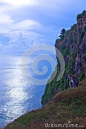 Un Mongkey en el acantilado