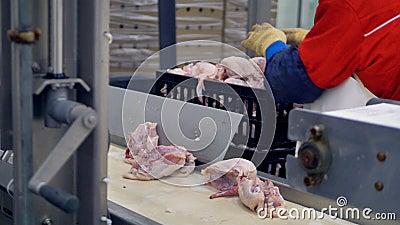 Un obrero recoge las reses muertas del pollo de un transportador en una planta de tratamiento de la reunión 4K almacen de metraje de vídeo