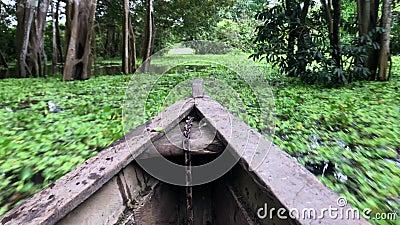 Un paseo del barco a través del río Amazonas, pasando las hojas verdes en la superficie y los árboles metrajes