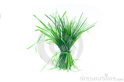 Un penacho de la hierba