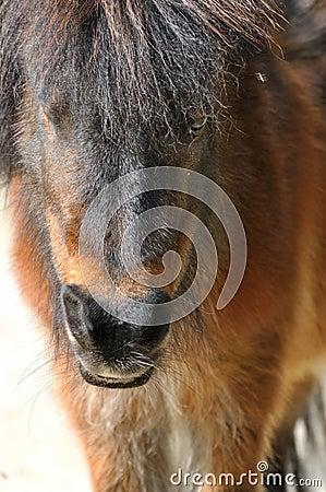 Un pequeño caballo