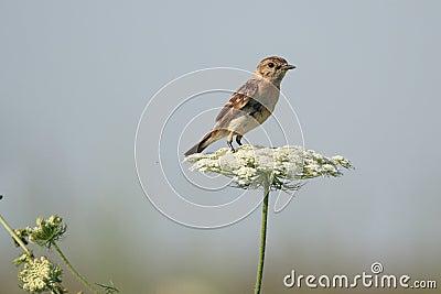 Un pájaro en una flor