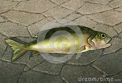 Un poisson hors de l eau - illustration de Digitals