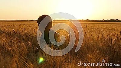Un ragazzino passa un wheatfield, avvertente le emozioni: felicità, gioia, delizia Il concetto di agricoltura video d archivio