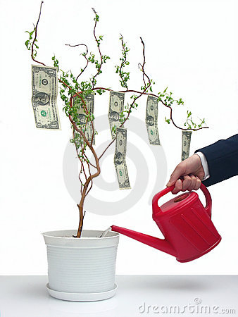Un árbol del dólar