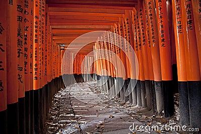 Un traforo di 10000 cancelli di torii