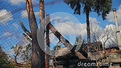 Un tronco de árbol se cae con una cuerda metrajes
