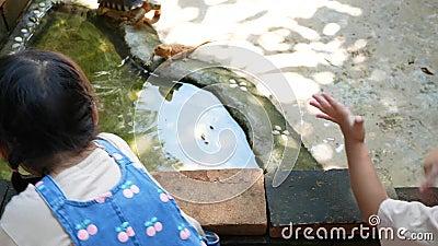 Una bambina asiatica guarda e cerca di catturare la tartaruga in piscina con curiosità e divertimento video d archivio