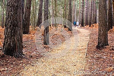 Una camminata nel legno