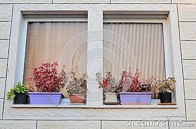 Una finestra con le tende ed i vasi da fiori sul davanzale fuori di nuova casa fotografia stock - Aprire una nuova finestra ...
