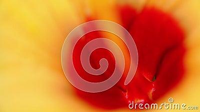 Una flor está bailando por el viento en modo macro almacen de metraje de vídeo