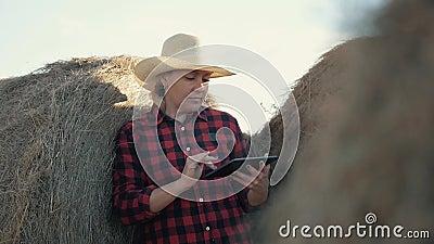 Una mujer es granjero con una tableta en un pajar farming Preparación del forraje para el invierno almacen de video