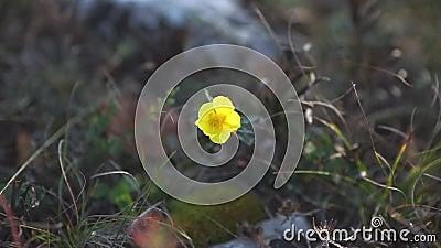 Una pequeña flor amarilla almacen de metraje de vídeo