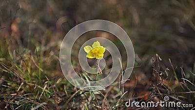 Una pequeña flor amarilla almacen de video