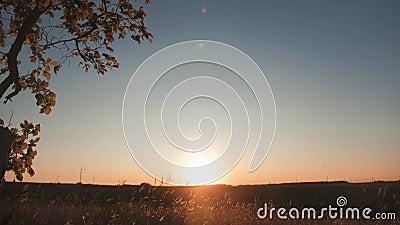 Una ragazza di Silhouette che alza su un altalena sotto un albero al sole Divertimento familiare in natura archivi video