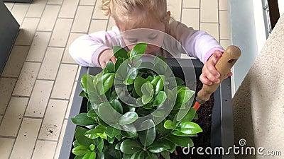 Una ragazza pianta il bonsai giapponese sul balcone video d archivio