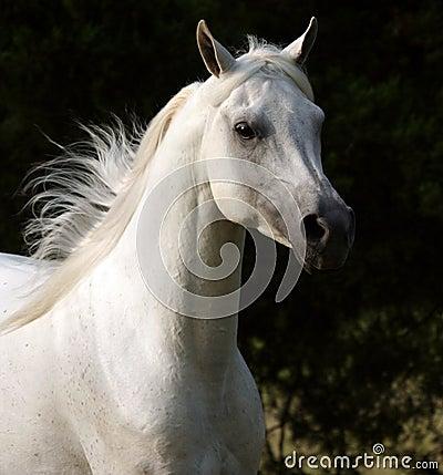 Free Unbridled Horse Royalty Free Stock Photography - 2822327