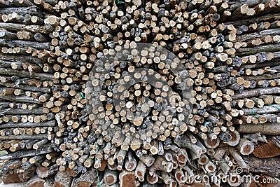 Uncut firewood