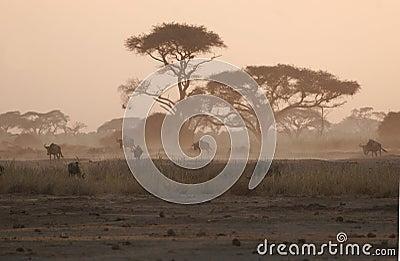 Under the Acacia trees