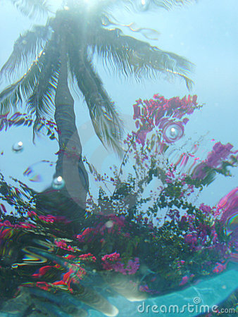 Under water view of palm tree