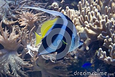 Undersea life