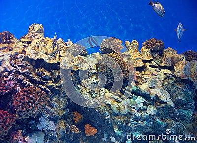 Undersea view