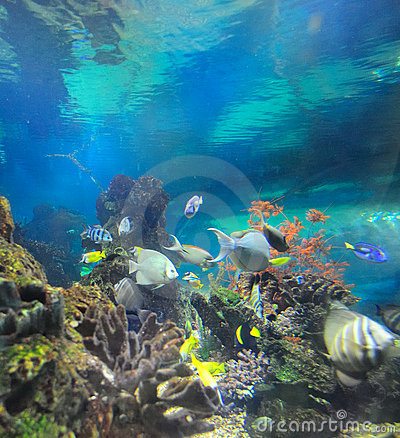Free Undersea World Royalty Free Stock Photography - 21287427