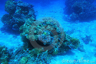 Undervattens- rött hav