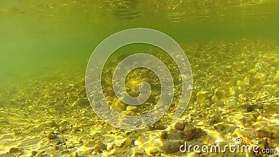 Undervattens- video av den sötvattens- strömmen stock video