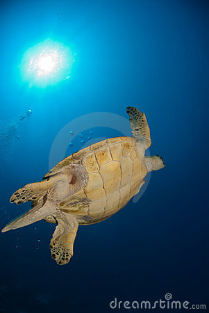 Underview Of A Sea Turtle Stock Photography - Image: 21164252