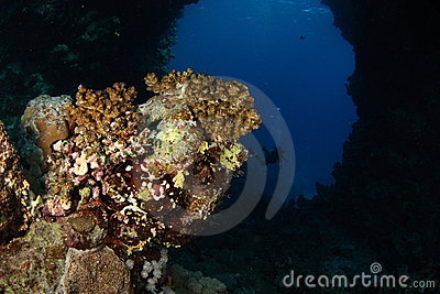 Underwater arch - Red Sea