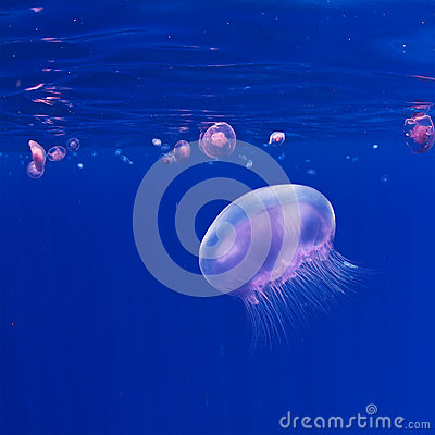 Underwater blue background with pink jellyfish