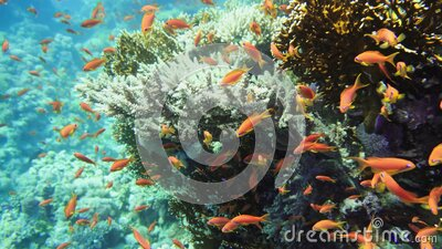 Underwater Colorful Tropical Fishes. Tropical underwater sea fishes. Underwater fish reef marine. Tropical colorful stock footage