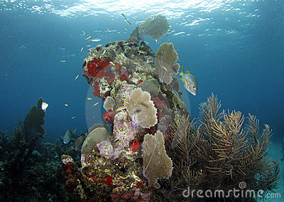 Underwater coral scene with fish, roatan, honduras
