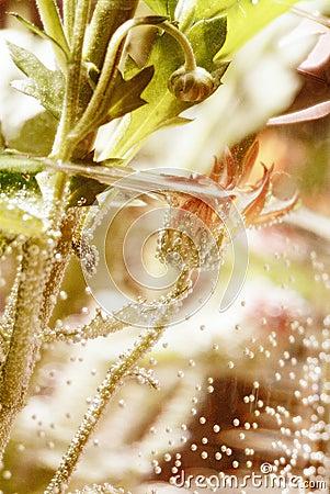 Underwater flower