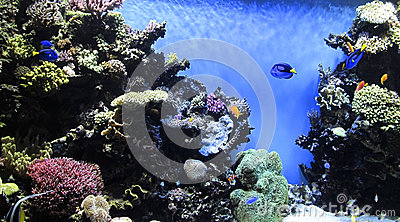 Underwater garden