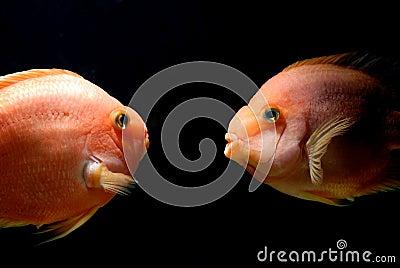 Underwater goldfish