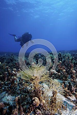 Underwater landscape with diver
