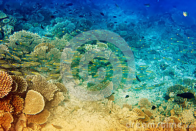 Underwater landscape of the tropical seas