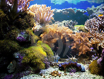 Underwater life. Coral reef, fish.